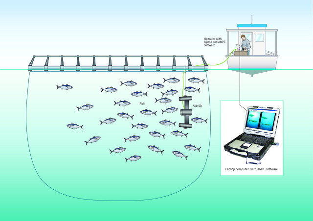 System Fish Fish Sizing Systems